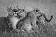 1_Lioness-with-two-Cubs-BW