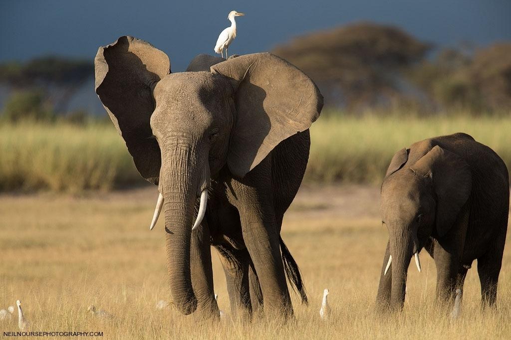 Africa Amboseli_0191