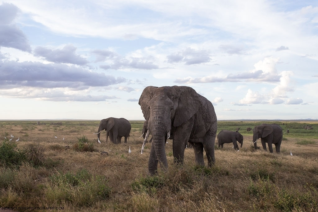 Africa Amboseli_0603
