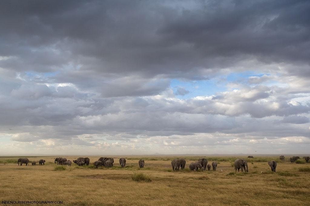 Africa,Ambooseli_0100