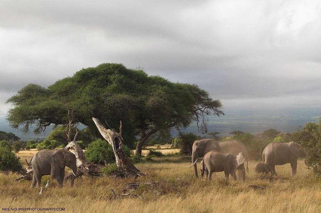 Amboseli Elephants_0059