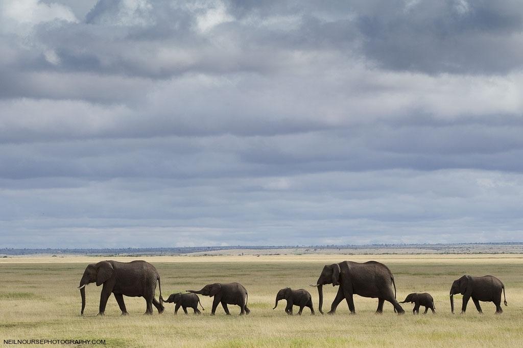 Amboseli Elephants_0091