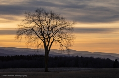 1_Baldwin-Hill-Late-Fall-Morning