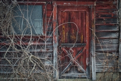 Barn-Door-and-Vines