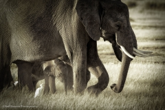 16_Africa Amboseli_0090-Edit