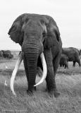 16_Africa Amboseli_0293