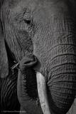 16_Africa Amboseli_0360-Edit