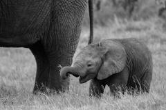 16_Amboseli Elephants_0140