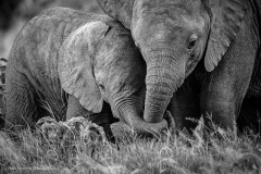 16_Amboseli Elephants_0161-Edit