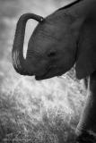 16_Amboseli Elephants_0215