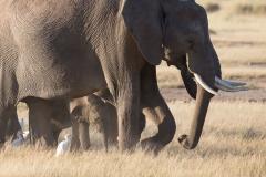 16_Africa Amboseli_0090