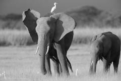 16_Africa Amboseli_0191