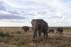 16_Africa Amboseli_0603