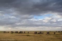 16_Africa,Ambooseli_0100