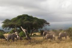 16_Amboseli Elephants_0059