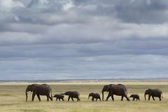 16_Amboseli Elephants_0091
