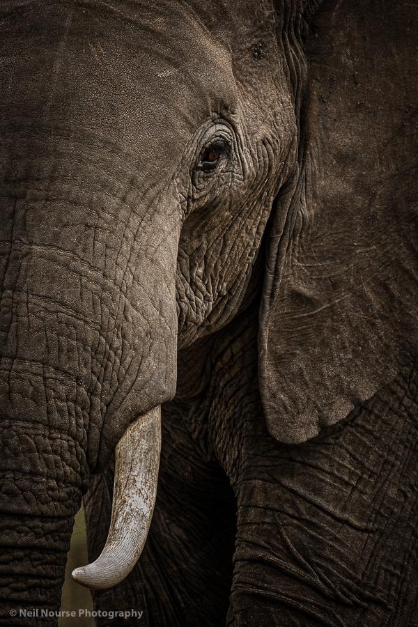 Elephant-Portrait