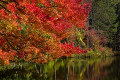 Autumn Colors_0077-1